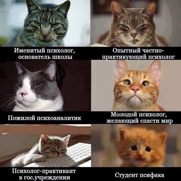 психолог2